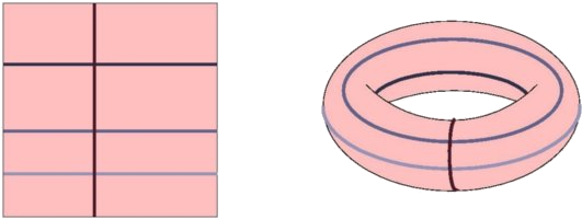 The length of verticals and horizontals are not preserved in the torus of revolution